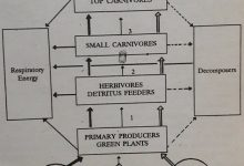 Photo of Trophic Levels And Ecological Pyramids